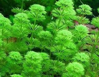 akvaryum led aydınlatma bitkiler