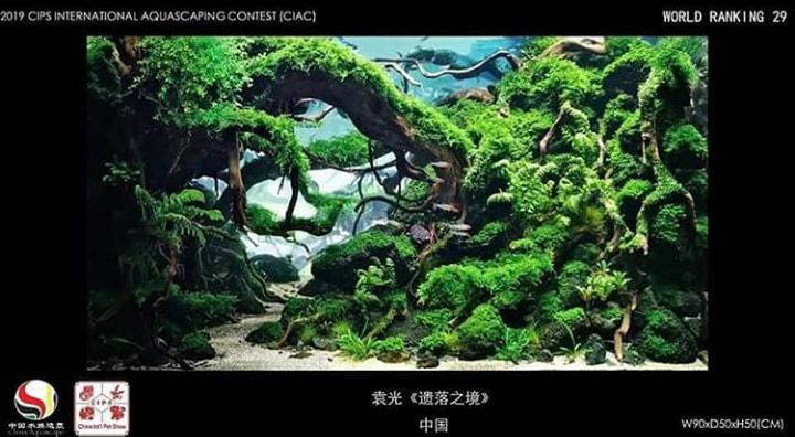 bitki akvaryumları