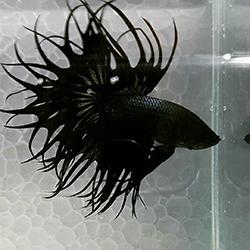 beta balık fiyatları