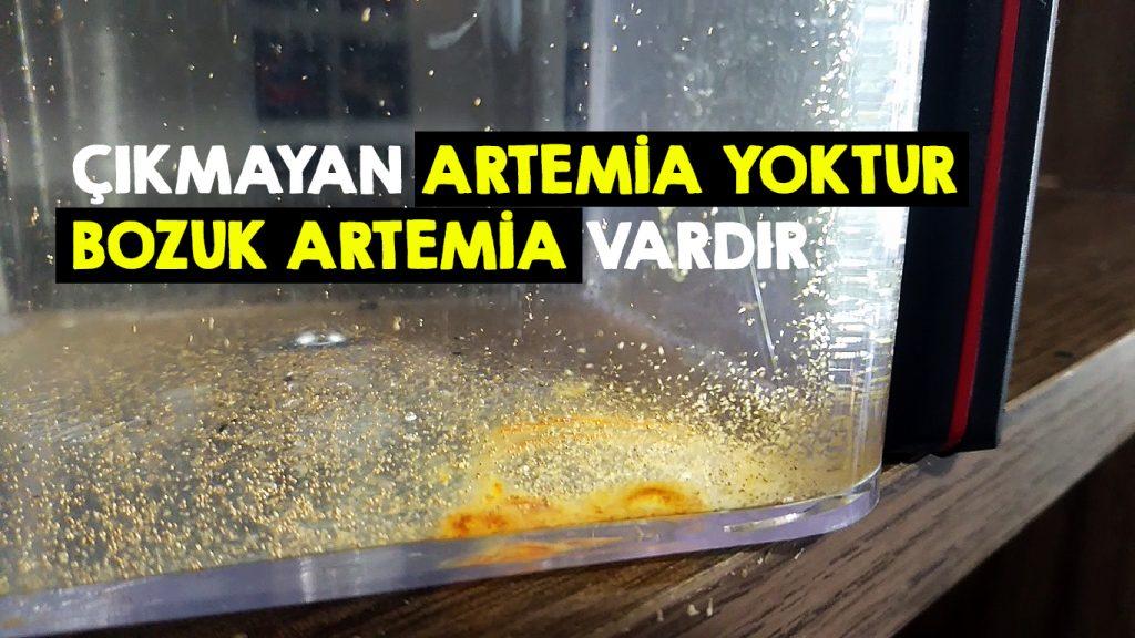 Artemia çıkarmanın püf noktaları